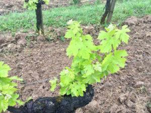 Estimation parcelle vignes Bordeaux