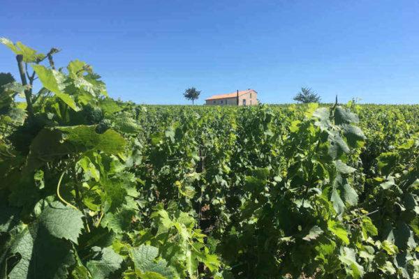 Évaluation d'une propriété viticole
