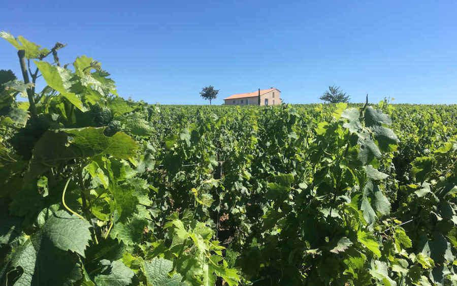Evaluation d'une propriété viticole