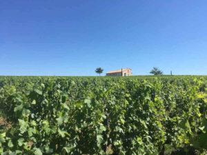 Expertise propriété viticole