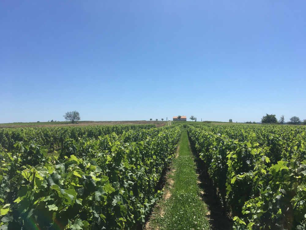 Expertise vigne Bordeaux